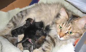 gattini appena nati